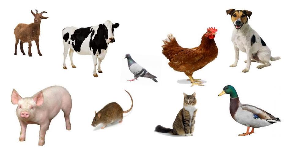 กระทรวงเกษตรฯ เร่วควบคุมป้องกันและกำจัดโรคระบาดสัตว์สู่คน สัตว์สู่สัตว์